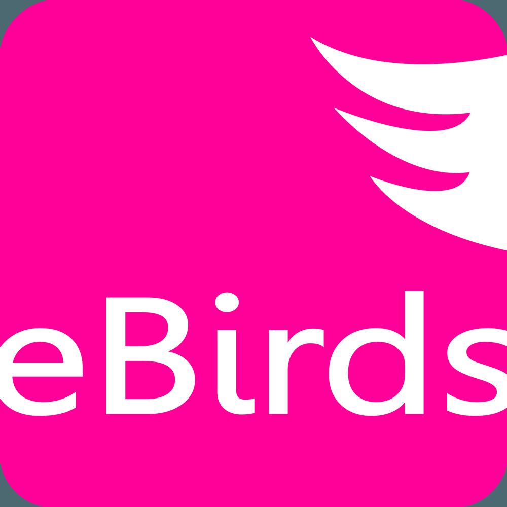 eBirds